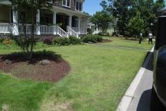 Homer's zoysia lawn 6-11-15 (1)