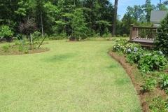 Homer's zoysia lawn 6-11-15 (2)